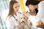 Gründung einer tierärztlichen Praxis