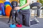 Tierphysiotherapiepraxis sucht Praxissoftware