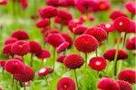Kaufmännische Komplettlösung für ein Unternehmen der Garten- und Anlagenpflege gesucht